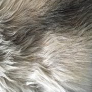 nordic_schapenvacht-woool-close-up