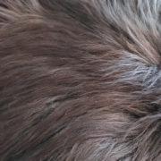 woool-schapenvacht-donker-gemeleerd