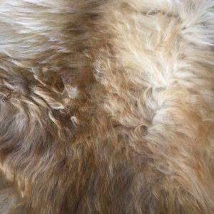 Schapenvacht Licht Gemeleerd Close-up
